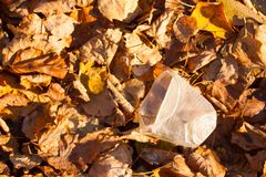 A carelessly throw away plastic. In a forest stock photography