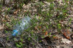 A carelessly throw away plastic water bottle nestled in the foliage litters a forest path.  royalty free stock images