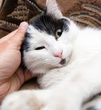 Caress the cat with her hand on the couch.  Stock Photos