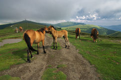 The caress of the horses - Balkan mountains, Bulgaria Royalty Free Stock Photos