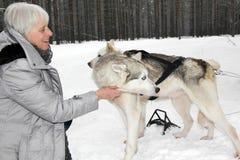 Caresse avec le chien de traîneau deux sibérien image libre de droits