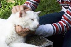 Caresse le chat Image libre de droits