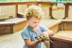 Caresses de fille d'enfant en bas âge et jouer avec la tortue dans le parc animalier concept de la durabilité, amour de la nature Images stock
