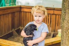 Caresses de fille d'enfant en bas âge et jouer avec le lapin dans le parc animalier concept de la durabilité, amour de la nature, Photo stock