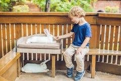 Caresses de garçon d'enfant en bas âge et jouer avec le lapin dans le parc animalier Photo libre de droits