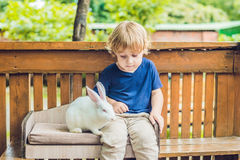 Caresses de garçon d'enfant en bas âge et jouer avec le lapin dans le parc animalier Image stock
