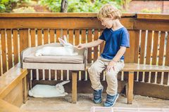 Caresses de garçon d'enfant en bas âge et jouer avec le lapin dans le parc animalier Photos libres de droits