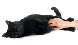 Caressing black cat Stock Photography