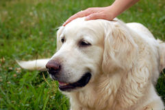 Caressing the dog Stock Photos