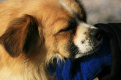 Caressing the dog Royalty Free Stock Images