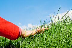 Caressing the grass. Child hand caressing softly the grassy surface stock photos