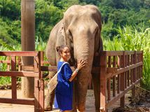Caresss della ragazza un elefante al santuario in Chiang Mai Thailand fotografie stock