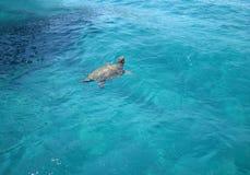 Caretta-Caretta-Meeresschildkröte auf Zante-Insel, Laganas, Griechenland Lizenzfreies Stockfoto