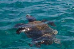 Caretta Caretta-Schildkrötenschwimmen in der Bucht Laganas, Zakynthos, Greec Lizenzfreie Stockfotos