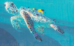 Caretta caretta turtle Stock Images