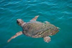 Caretta no mar fotografia de stock