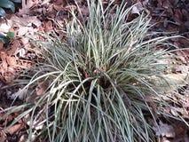 Carex Stock Images