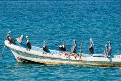 Carga de barco de pelícanos Fotografía de archivo