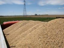 Carga del carro del grano Foto de archivo