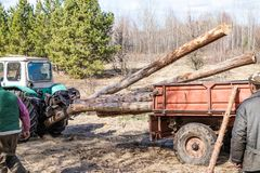 Carga e transporte mec?nicos da madeira de pinho usando um trator imagens de stock royalty free