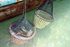 Carga para los cangrejos foto de archivo libre de regalías