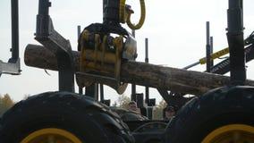 Carga pesada do equipamento com logs do corte da tosquiadeira Grande carregador e operações do log na jarda do log em um log das  filme