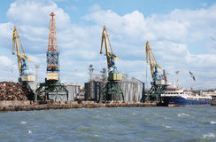 Cargo cranes in the sea port Stock Photography