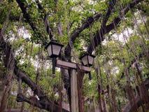 Cargo da lâmpada na frente da grande única árvore de Banyan em Lahaina na ilha de Maui imagens de stock