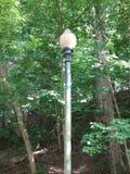 Cargo da lâmpada no parque Imagem de Stock