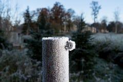 Cargo gelado do jardim, fundo verde do ambiente natural fotografia de stock royalty free