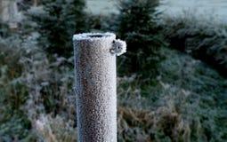 Cargo gelado do jardim, fundo verde do ambiente natural imagem de stock