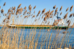 Cargo ship on river - through the reeds Royalty Free Stock Images