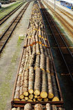 Cargo timber train Stock Photography