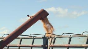 Cargue el maíz en el camión almacen de metraje de vídeo