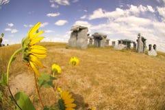 Carhenge - merkwürdiges Amerika - Sonnenblume Lizenzfreies Stockbild