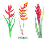 Caribaea Heliconia, красные формы и rostrata Heliconia коготь омара смертной казни через повешение, ложная райская птица изолиров бесплатная иллюстрация