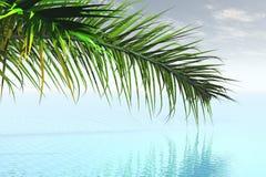 Caribbean. 3D render of the caribbean Royalty Free Stock Photos