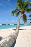 Caribbean beach. With palm tree Stock Photo