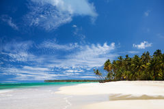 Caribbean beach. Beautiful deserted palm lined caribbean beach Royalty Free Stock Photos