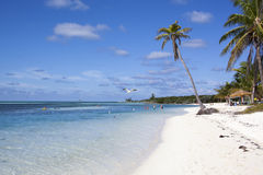 Free Caribbean Beach Royalty Free Stock Photography - 52166077