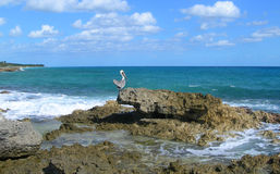 Caribbean beach background with pelican Royalty Free Stock Photos
