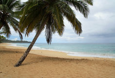 Caribbean beach in bad weather Royalty Free Stock Photos