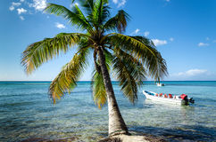 Caribbean beach with boat floating on the sea. Palm in foreground stock images