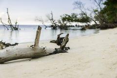Caribbean. Beach in cayo Jutia Cuba, very beautifull Beach in silense of the ocean wawing up on the beach Royalty Free Stock Images