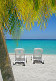Caribbean beach chairs and palm. Empty tropical beach chairs on sand at shoreline with palm trees in front  in the Caribbean Stock Photo