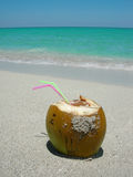 Caribbean beach coconut Royalty Free Stock Images