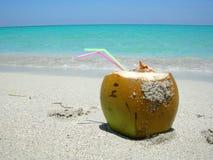 Caribbean beach coconut stock images