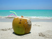 Caribbean beach coconut stock photo