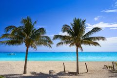 Caribbean beach coconut palm trees Riviera Maya. Caribbean beach coconut palm trees in Riviera Maya of Mexico stock image