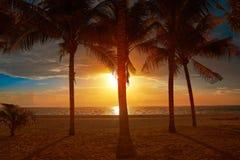 Caribbean beach coconut palm trees sunset. Caribbean beach sunset on coconut palm trees in Riviera Maya of Mexico Royalty Free Stock Photos